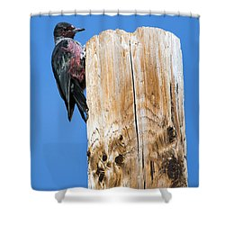 Any Tree Will Do Shower Curtain by Mike Dawson