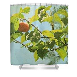 Apple A Day Shower Curtain by Karen Ilari
