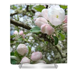 Apple Tree Blossoms Art Prints Apple Blossom Buds Baslee Troutman Shower Curtain by Baslee Troutman