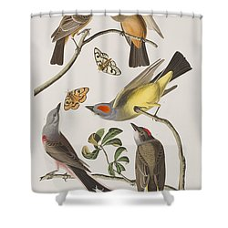 Arkansaw Flycatcher Swallow-tailed Flycatcher Says Flycatcher Shower Curtain by John James Audubon