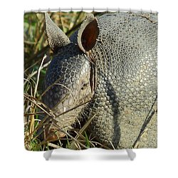 Armadillo By Morning Shower Curtain by Robert Frederick