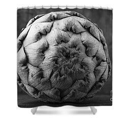 Artichoke Black And White Still Life Two Shower Curtain by Edward Fielding