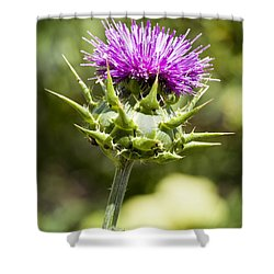 Artichoke Thistle 3 Shower Curtain by Kelley King