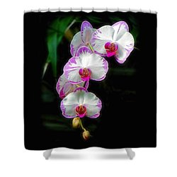 Cascading Orchid Beauties Shower Curtain by Sue Melvin
