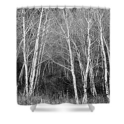 Aspen Forest Black And White Print Shower Curtain by James BO  Insogna