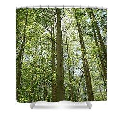 Aspen Green Shower Curtain by Eric Glaser