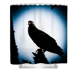 Astral Pigeon Shower Curtain by Loriental Photography
