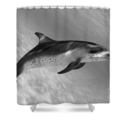 Atlantic Spotted Dolphin Shower Curtain by Dave Fleetham - Printscapes