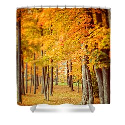 Autumn Grove  Shower Curtain by Lisa Russo