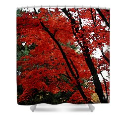 Autumn In New England Shower Curtain by Melissa A Benson