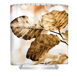 Autumn Leaves Shower Curtain by Frank Tschakert