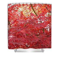 Autumn Red Poster Shower Curtain by Carol Groenen