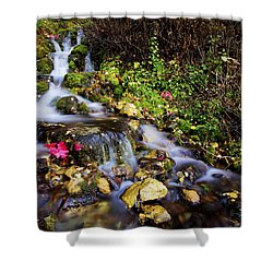 Autumn Stream Shower Curtain by Chad Dutson