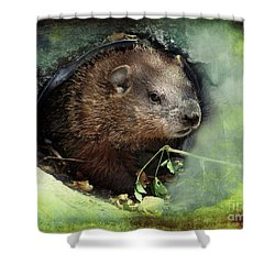 Baby Groundhog Shower Curtain by Elaine Manley