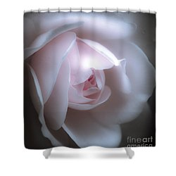 Baby Pink Rose Shower Curtain by Karen Lewis
