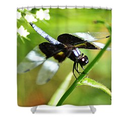 Back In Black - Black Dragonfly Shower Curtain by Bill Cannon