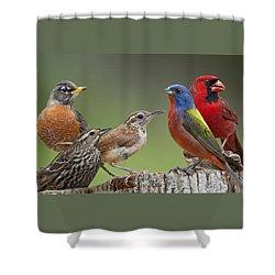 Backyard Buddies Shower Curtain by Bonnie Barry