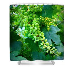 Backyard Garden Series - Young Grapes Shower Curtain by Carol Groenen