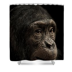 Baffled Shower Curtain by Paul Neville