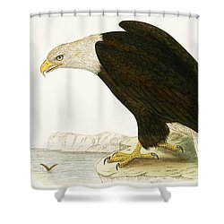 Bald Eagle Shower Curtain by English School