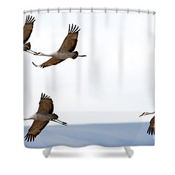 Bank Right Shower Curtain by Mike Dawson