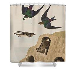 Bank Swallows Shower Curtain by John James Audubon