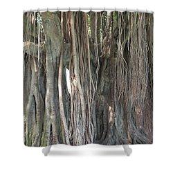 Banyan Tree Shower Curtain by Carol Groenen