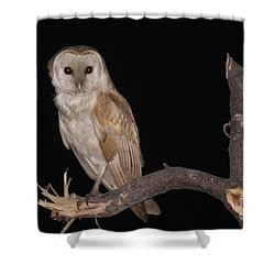 Barn Owl Tyto Alba Shower Curtain by Alon Meir