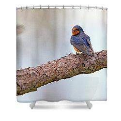 Barn Swallow On Assateague Island Shower Curtain by Rick Berk