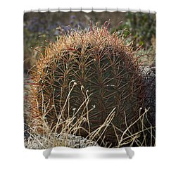 Barrel Cactus Shower Curtain by Kelley King