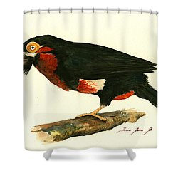 Bearded Barbet Shower Curtain by Juan Bosco