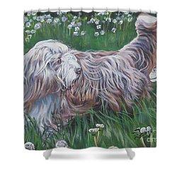 Bearded Collie Shower Curtain by Lee Ann Shepard