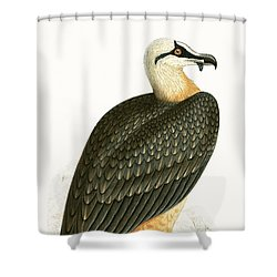 Bearded Vulture Shower Curtain by English School
