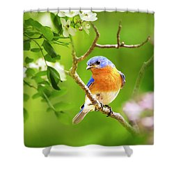 Beautiful Bluebird Shower Curtain by Christina Rollo