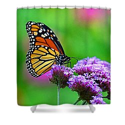Shower Curtain featuring the photograph Beautiful Monarch by Rodney Campbell