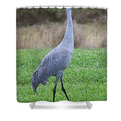 Beautiful Sandhill Crane Shower Curtain by Carol Groenen