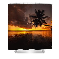 Bending Palm Shower Curtain by Ron Dahlquist - Printscapes