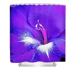 Big Glad In Purple And Blue Shower Curtain by Bill Caldwell -        ABeautifulSky Photography