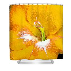 Big Glad In Yellow Shower Curtain by Bill Caldwell -        ABeautifulSky Photography