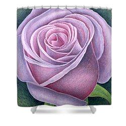 Big Rose Shower Curtain by Ruth Addinall