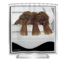 Birds Of A Feather Shower Curtain by Brian Wallace