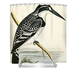 Black And White Kingfisher Shower Curtain by English School