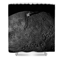 Black And White Potato Shower Curtain by Dan Sproul