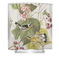 Black And Yellow Warblers Shower Curtain by John James Audubon
