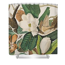 Black Billed Cuckoo Shower Curtain by John James Audubon