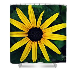 Black-eyed Susan Shower Curtain by Sarah Loft