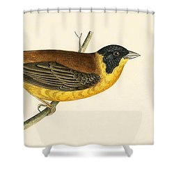 Black Headed Bunting Shower Curtain by English School
