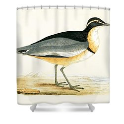 Black Headed Plover Shower Curtain by English School