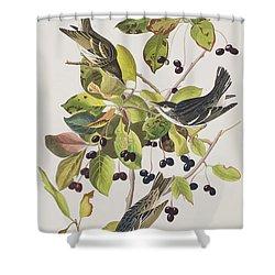 Black Poll Warbler Shower Curtain by John James Audubon