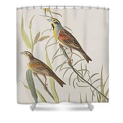 Black-throated Bunting Shower Curtain by John James Audubon